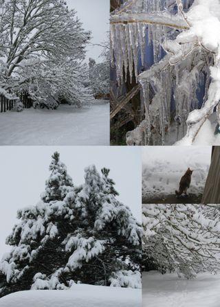 Snow picsc