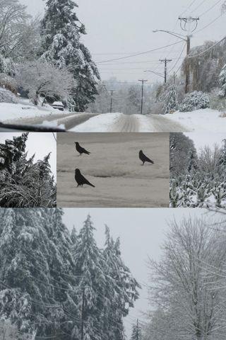 Snow collage1