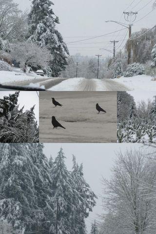Snow collage1