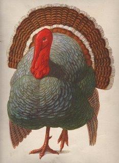 Turkey001