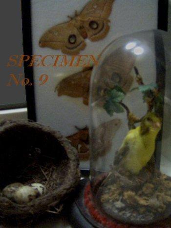 Bird_and_bug_specimen