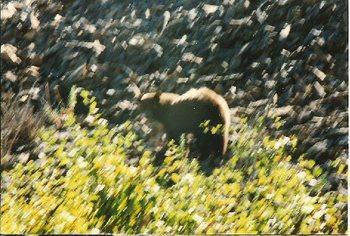 Bears5_2